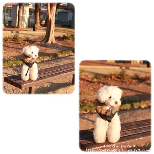 14_20110119084325.jpeg