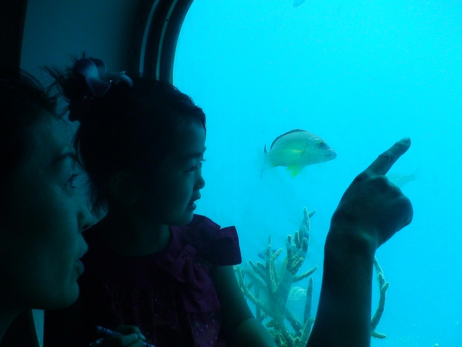 フィッシュアイ海中展望塔2