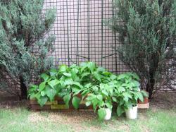 家庭菜園 2