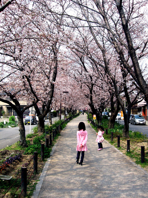 2010年桜並木