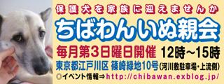 chibawan_teiki_inuoyakai320x120.jpg