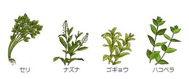 春の七草1