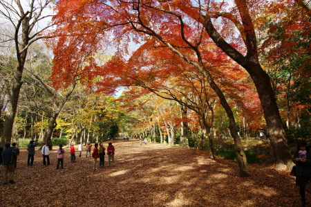 糺の森0ブログ