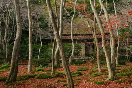 2010_祇王寺 ブログ