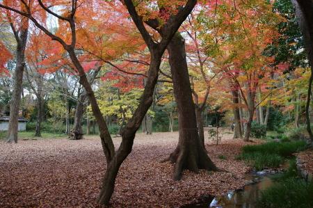 糺の森3ブログ