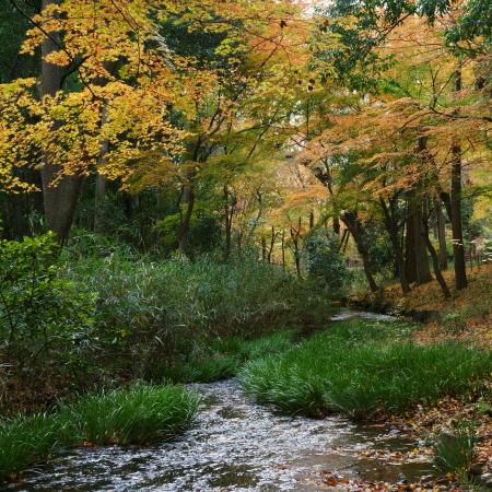 糺の森4ブログ