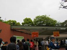 IMG_0209-uenopanda.jpg