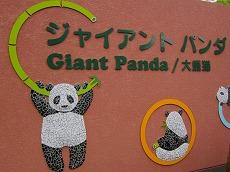 IMG_0210t-uenopanda.jpg