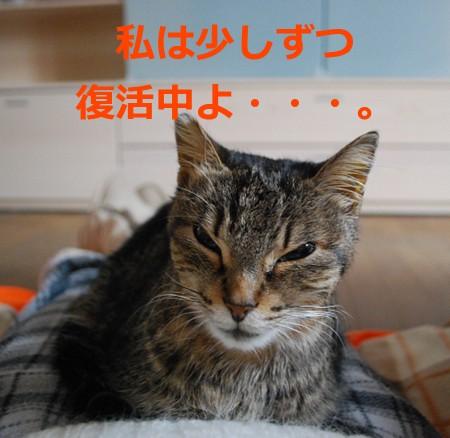 borse6951_20130126084101.jpg