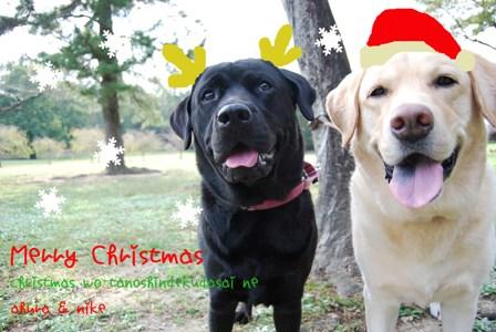christmascard_2.jpg