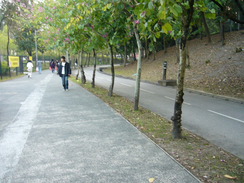 お散歩コース1