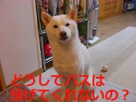 003_20091216201231.jpg