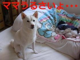 004_20091202201536.jpg