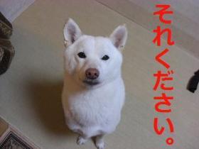 018_20091215202034.jpg