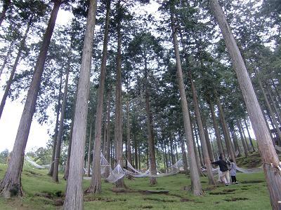 ハンモックの森
