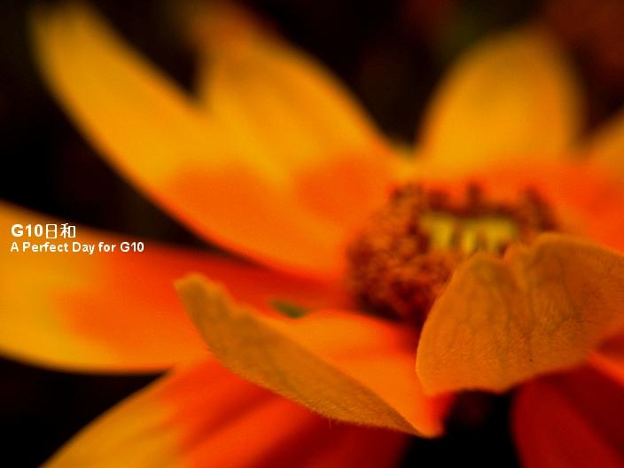 PICT0050_2.jpg