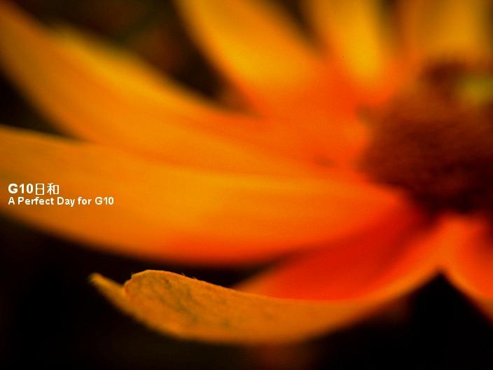 PICT0052_2.jpg