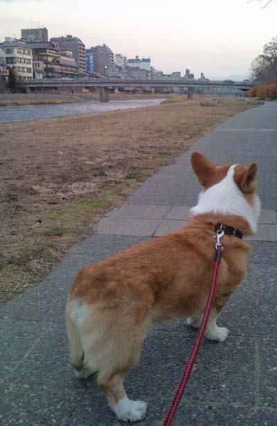 賀茂川のリク