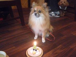 BirthdayGirl/アロイちゃん