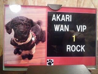 Akari Wan VID No.1/ロックちゃん