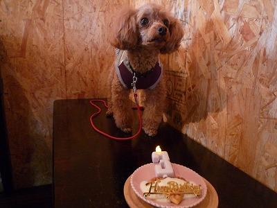 CoCoくん/Birthday Boyくん♪♪