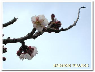 20110506av002.jpg