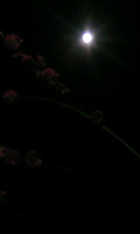 110317_225901お月様&枝垂れ梅