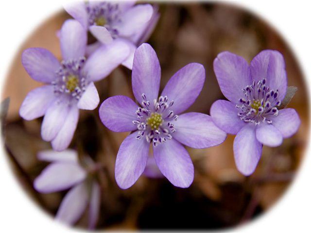 紫ぼかし_R