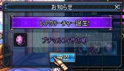 プチマルフィサキタ━━(゚∀゚)━━!!!