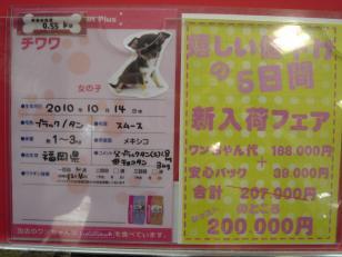 DSC02770_convert_20101216094130.jpg
