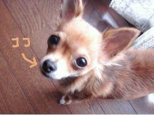 snap_akiyu2_201012002520.jpg