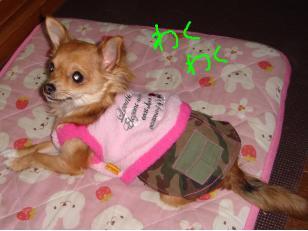 snap_akiyu2_201113122954.jpg
