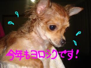 snap_akiyu2_201113174058.jpg
