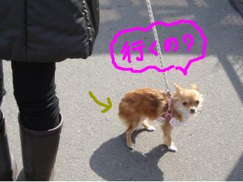 snap_akiyu2_20112212559.jpg