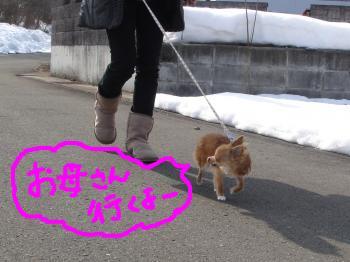 snap_akiyu2_20112213326.jpg