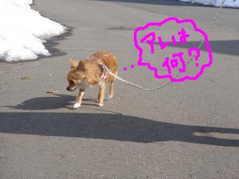 snap_akiyu2_201122134217.jpg