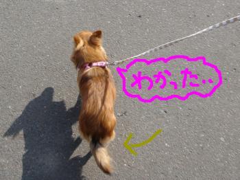 snap_akiyu2_20112213756.jpg