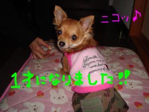 snap_akiyu2_201122191142.jpg