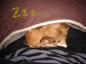 snap_akiyu2_201122997.jpg