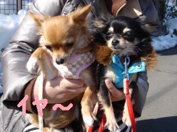 snap_akiyu2_201123103716.jpg