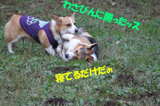 20091124_10.jpg
