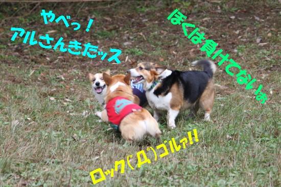 20091124_11.jpg
