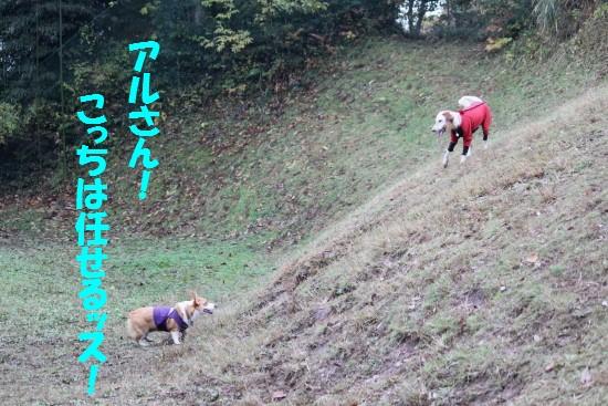 20091124_16.jpg