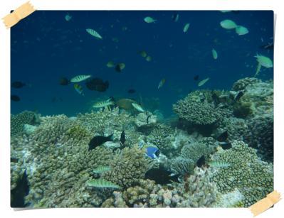 モルディブ海の中
