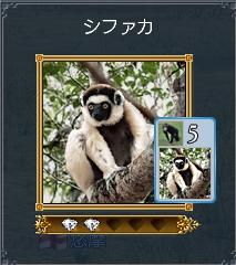 011611 シファカ