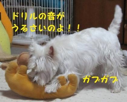 IMG_4367.jpg