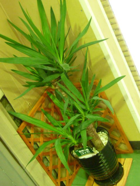 観葉植物1.jpg