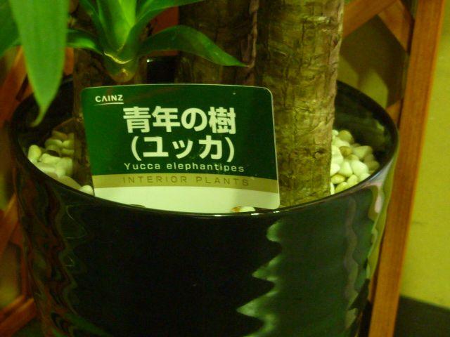 観葉植物2.jpg