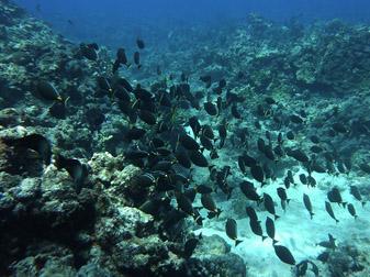 diving010.jpg