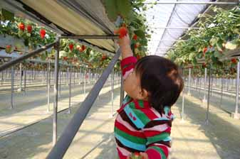 strawberry009.jpg